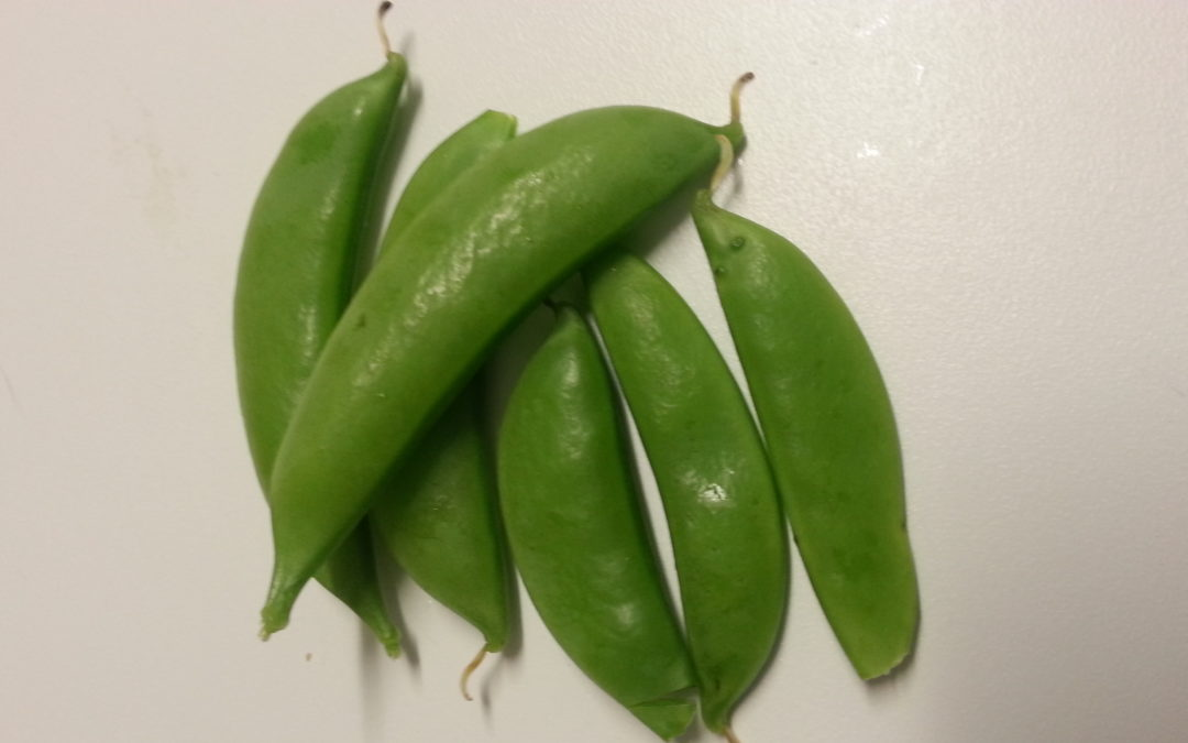 Fun Facts about Sugar Snap Peas