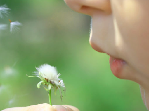 Allergies and Immune Health